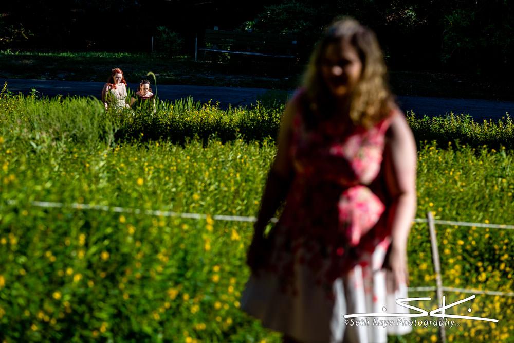 Arnold Arboretum first look